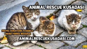 Animal Recue Kusadasi Facebookgroup